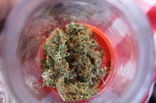 Marihuana: les amenaces d'una nova indústria